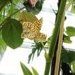 アクアマリンふくしまなら、動物も植物も楽しめる!20年の育成期間を経て、世界最大のランがついに開花!