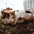 """いつも通りすぎる道で出会った""""猫と日常"""" 街に馴染む生きものたちを写した写真展に心がほっとする"""