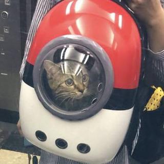 「ネコちゃんゲットだぜ!」 モンスターボール…