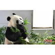 中国人科学者がパンダを正確に見分ける技術を開発―中国メディア