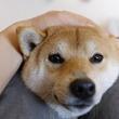 犬が無防備なときに見せる5つの仕草や表情