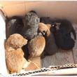 段ボール箱に入れられて道路わきに捨てられた7匹の子犬