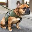 米国LA発・ミルスペック準拠のペットアパレルブランド『Kiloniner(キロナイナー)』から入手困難のハーネス「M1 Tactical Dog Harness Mesh Body」が再入荷決定