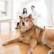 狂犬病以外の犬の混合ワクチンは必要か?
