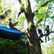 非日常の木登り体験『ツリーイング』で木の上の世界を楽しもう!2019年6月23日(日)体験イベント開催(滋賀県立近江富士花緑公園)