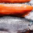 夏までにダイエットしたければ、鮭を食べるといいかも!?
