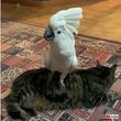 すごく・・・シュールです。猫の上に乗りながら犬の鳴き声で鳴くタイハクオウム