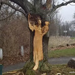 木から現われた伝説の幽霊「ホワイトレディ」(アメリカ)