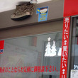 ツバメの巣に不動産店が設置した『貼り紙』に称賛の嵐! 「粋だなあ」「最高すぎる」