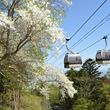 ペット乗車OK!のゴンドラで「日本最大級の花の絶景」を空中散歩【こどもと遊ぼう×クルマ旅マスター Vol.2】