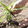 警視庁が教える『雑草』を根っこから抜く方法 「これで根絶やしにできる!」