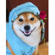 イヌやネコヘのマイクロチップ装着を義務化した日本の動物愛護法改正案を中国ネット称賛=「中国でも普及させるべき」