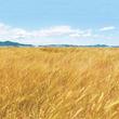 【大麦工房ロア】地元の大麦を食べて生活習慣病にさようなら!『おおむぎ健康講座』を6月14日と6月28日に開催!
