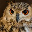 フクロウやハリネズミなど……夜行性の動物はどうして夜中に活動するの?