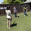 楽しく学びながら愛犬とのお出かけを満喫しよう! 基本的なしつけと上級しつけの2段階で愛犬と学び、ゲーム感覚で楽しめちゃうしつけ教室を開催いたします。