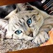 毛布と猫ちゃんのモフモフ感がすごい! 色鉛筆で描いたリアルな猫の絵に「色鉛筆の域を超えている」の声