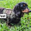 【Kiloniner】毎週木曜日の新商品発売、第二弾!人気の「Compact K9 Tactical MOLLE Dog Vest」に新色・レンジャーグリーン登場