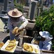 お墓の中にニホンミツバチの巣 困っていた住職に養蜂家が手を差し伸べる