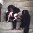 死にかけの子犬を拾ったら、チンパンジーも世話してくれた。愛と奇跡の物語