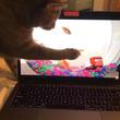 捕まえられないニャン PC画面の中の金魚を捕まえられず首をかしげる猫がかわいい