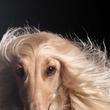 「ビジュアルが強い」「何この高貴なわんちゃん」 ある犬種の姿に驚愕の声