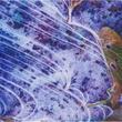 アイデムフォトギャラリー[シリウス] 写団「群峰」「第35回群峰展」期間:2019年6月20日(木)~6月26日(水)
