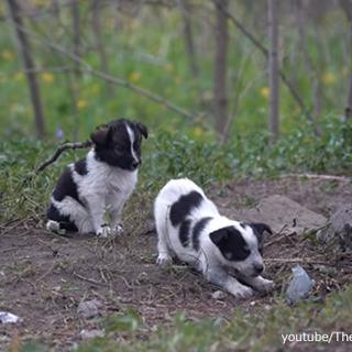 チェルノブイリで生まれた子犬たちを保護し、飼…