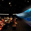 オンライン&全国160以上の店舗で子供服を販売するブランシェス、大迫力の映像で美ら海の生き物や地球温暖化を学ぶ「サンゴの海3D上映会&ワークショップ」を開催!