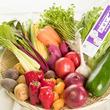 世界初!驚きの高栄養価の美容健康野菜が誕生! ~農薬不使用で洗わずに食べられる、子供や女性にも優しい野菜~