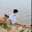 『ほら危ないよー!』川辺で遊ぶ少女の面倒をみるワンちゃんが凛々しい!