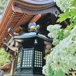 水無月に花とお寺と縁を結んで~東京『高幡不動尊あじさいまつり』