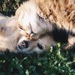 通販サイトAmazonで動物保護施設の支援プログラムがスタート。必要な物資をポチっと支援できるようになったぞ!
