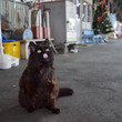 さようなら、ひたちなか海浜鉄道の駅猫「おさむ」 最期まで愛された日々