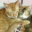 よく頑張ったニャ、うれしいニャ!出産を終えた母猫と子猫たちをいたわる新米イクメン猫