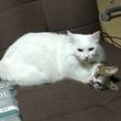 「うちの猫、謎の状態」 ネコ団子を形成するネコちゃん達が器用すぎて境界がよくわからない