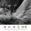 野生の気高さが際立つモノクロームの世界 Bunkamura Box Galleryで『増田寿志 個展』