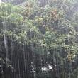 災害級の大雨で熊本市長に「休校にして」の声殺到!しかし・・・