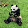 まるで生きている動物!「 究極のパンダ着ぐるみ 」!撮影&CM&プロモーション&イベントへのレンタル開始!