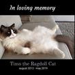 追悼~ラグドールのティモ、飼い主さんと暮らした7年間のメモリー