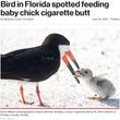 タバコのポイ捨てが招いた悲劇 餌と間違え吸い殻をひなに与える親鳥(米)