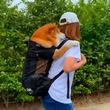 災害時の愛犬のために買ったリュック 飼い主さんのオンブで移動する柴犬がかわいい