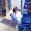 「おねがい、治して…」手を怪我してしまい薬局に助けを求めるトルコの野良犬