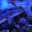 【新宿プリンスホテル】鮫にヒトデに熱帯魚。歌舞伎町に水族館!?東京コミュニケーションアート専門学校ECOと産学連携イベントを開催