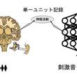 ディープラーニングで音を認識 ほ乳類の脳に近い反応を示す