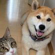 「これは罠だ!診察券を持っている!」 散歩と思っている犬を必死に止める猫
