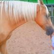 障害を持つ少年、馬に心を開いた瞬間は感動的