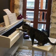 作曲、演奏はネコちゃんです ピアノをひくネコちゃんがかわいい