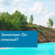 インスタ映えスポットの湖、実は廃棄物の処分場 ロシアの電力会社が「泳がないで」と呼びかけ