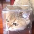 ディズニー映画かな?猫の鼻先にチョウが止まるというファンタジーな光景