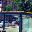 バス停の屋根に植物を植えてミツバチが気軽に立ち寄れる場所に。オランダで始まった人とミツバチが共存できる取り組み